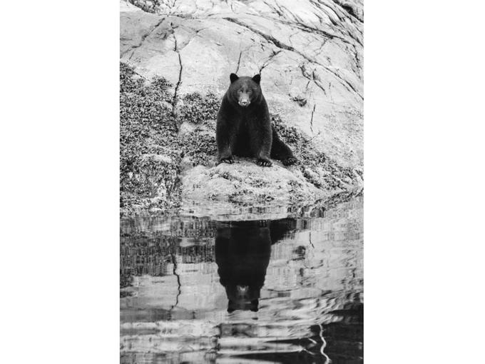 Fortune Bear